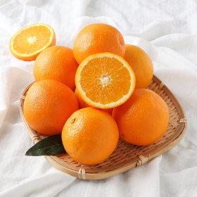 (행사상품)HB 작지만 블랙라벨 오렌지야_20-24입 박스