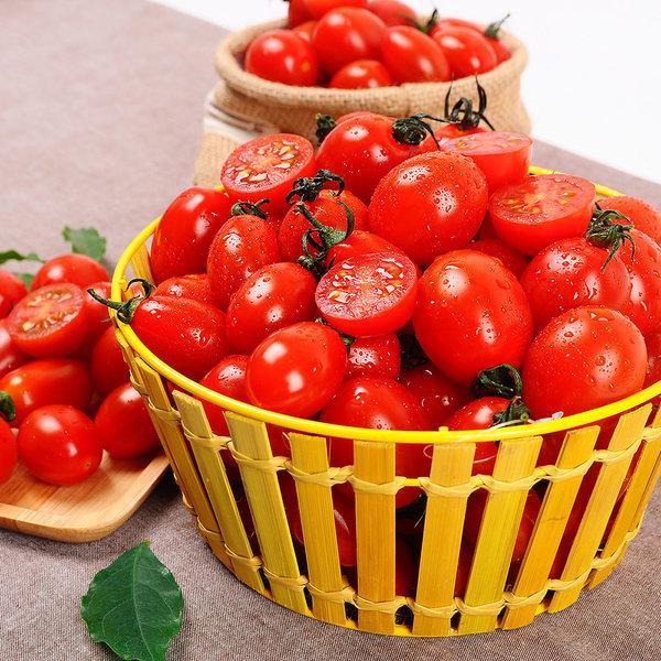 방울토마토 대추방울토마토  1.2kg (중소과/정품) 상품이미지