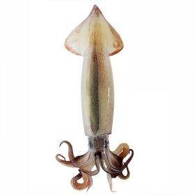 대한민국 어선 통통 오징어 1kg 6-10미 /먼바다 원양산