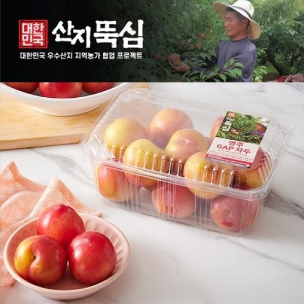 GAP 영주 자두 (1KG/팩) 상품이미지