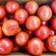 (성은푸드)신선한 완숙 찰토마토 10kg (1~2과)