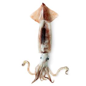 태안 자연산 손질오징어 (왕특대)250g x5팩 /총 1.25kg