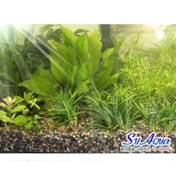 초보자 수초세트(40cm어항용)수초자연수초초보자수초초보수초세트수초수초세트 상품이미지