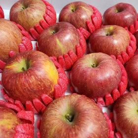 명절 설 추석선물세트 사과 5kg 17-20과 (중소과)