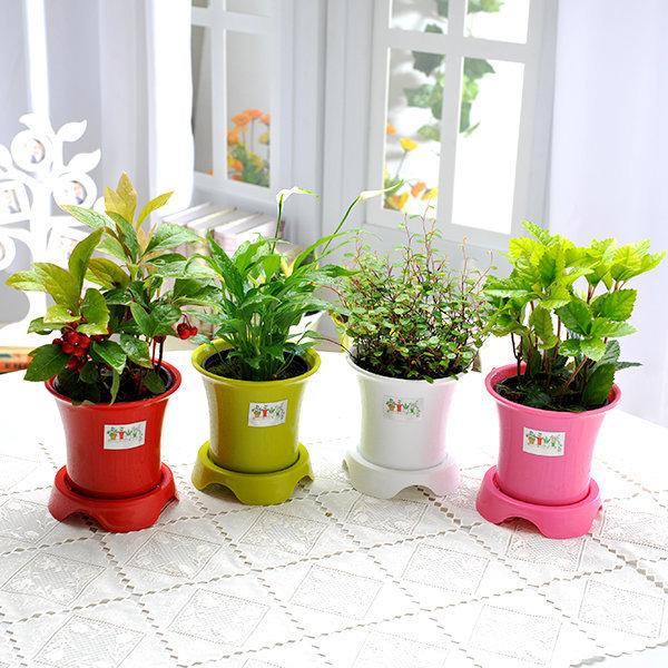 초보자도 키우기 쉬운 공기정화식물+화분세트 상품이미지