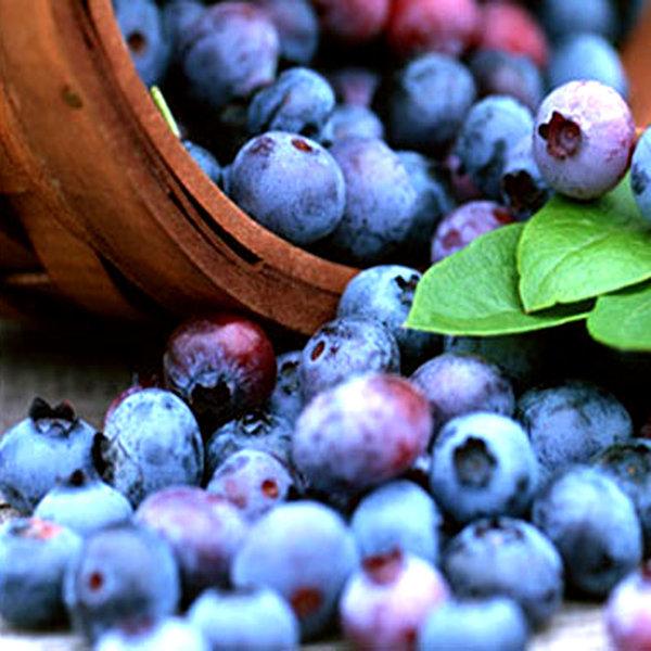 냉동 블루베리3kg(Blueberry) /냉동과일 20종 상품이미지