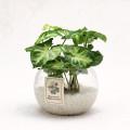 공기정화식물 수경식물세트 19종 택1