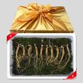 BIG HIT 토종 산양산삼 5년근 10뿌리 선물세트