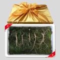 토종 산양삼 7년근 5뿌리 선물세트