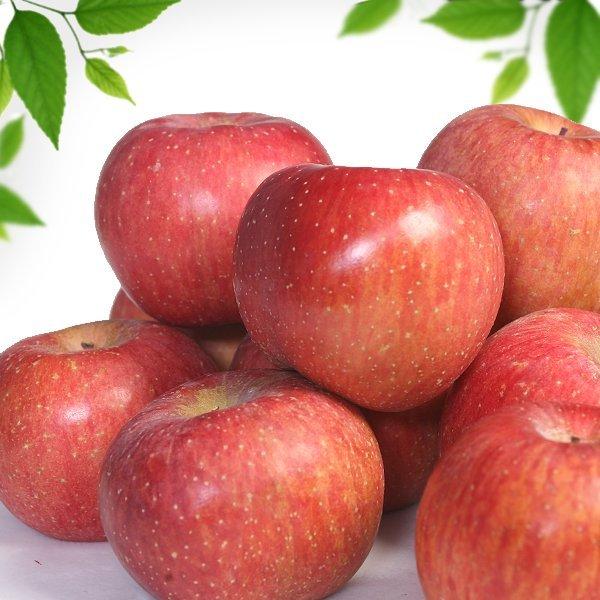 사과10kg/마른 흠집햇사과 / 가정용 / 쥬스용사과 상품이미지