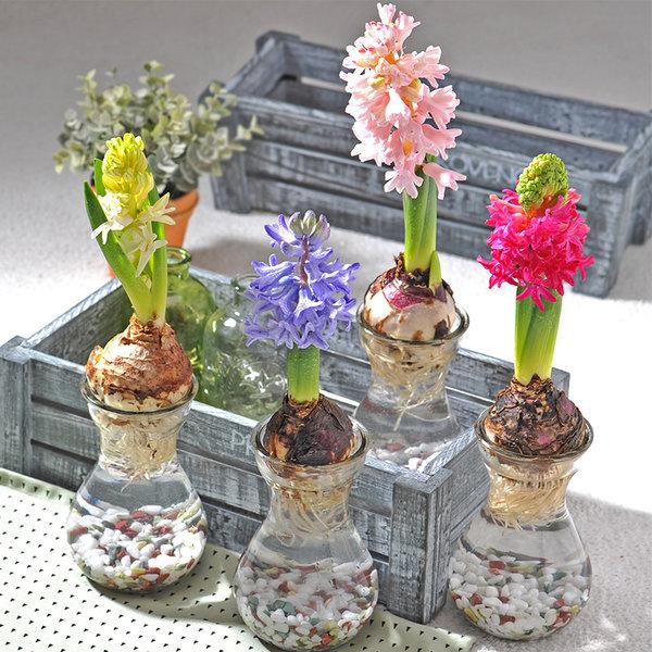 초보자도 키우기 쉬운 수경재배 공기정화식물 diy세트 상품이미지