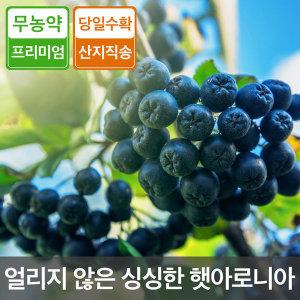 2019 무농약 무주 아로니아생과 5kg/10kg 농장직송