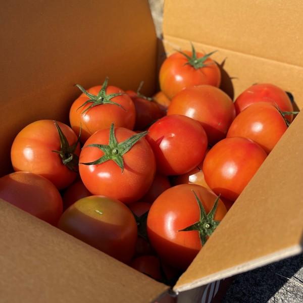 자연속애/토마토/쥬스용 5kg 산지직송/못난이토마토 상품이미지