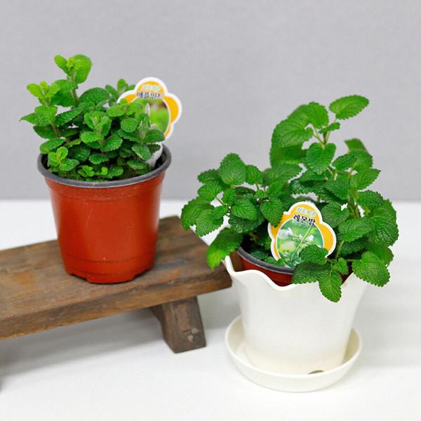 가꾸지오 공기정화식물 포트식물 47종 택1 상품이미지
