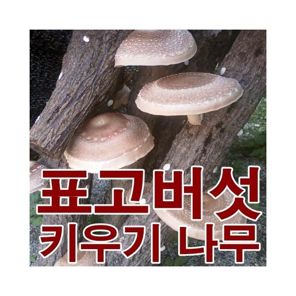 (연주농장) 직접키워먹는 표고버섯 느타리버섯키우기 상품이미지