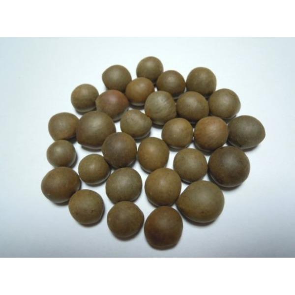 녹차씨앗 10립/녹차나무씨앗/차나무씨앗/국내채종종자 상품이미지