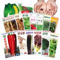 씨앗모음-쌈채소/고추/상추/약초/야생화/새싹씨앗종자