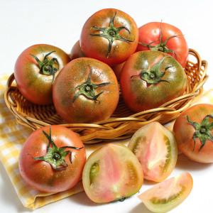 [GFresh]토마토 / GAP 인증 부산 김정용님의 대저토마토 2kg