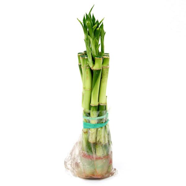 가꾸지오 수경식물 개운죽/행운목 시리즈 상품이미지