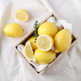 레몬7-14입 칠레산 _봉