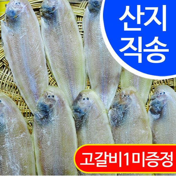 국내산 반건조 박대 10마리(소 24cm)/군산산지 직배송 상품이미지