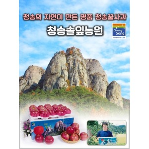 청송꿀사과/청송사과/고당도부사10kg/5kg/선물용사과