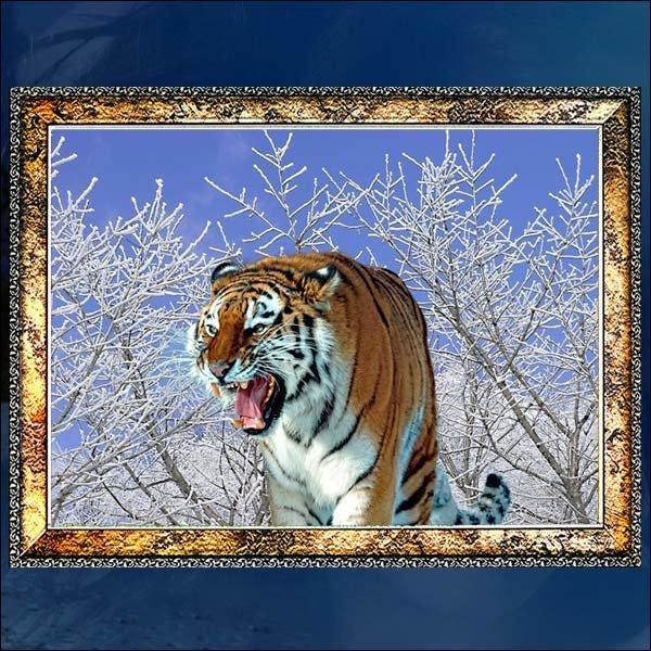 B573/호랑이액자/호랑이그림/호랑이사진/벽걸이액자 상품이미지