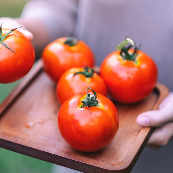 양가네 유기농 토마토 5kg 대추방울토마토 4kg 상품이미지