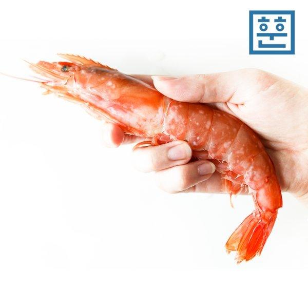 훈훈수산 자연산 홍새우 1kg (적새우 왕새우) 상품이미지