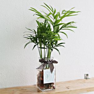 수경재배/화분/수생/수경식물/공기정화식물/체험학습