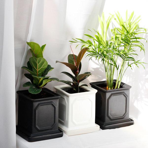 아침향기 공기정화식물 고급몰딩화분 강남화분 상품이미지