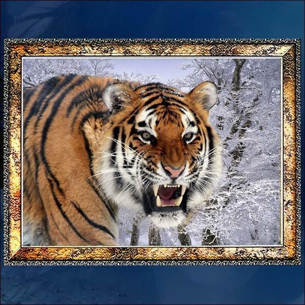 E177/호랑이액자/호랑이그림/호랑이사진/벽걸이액자 상품이미지