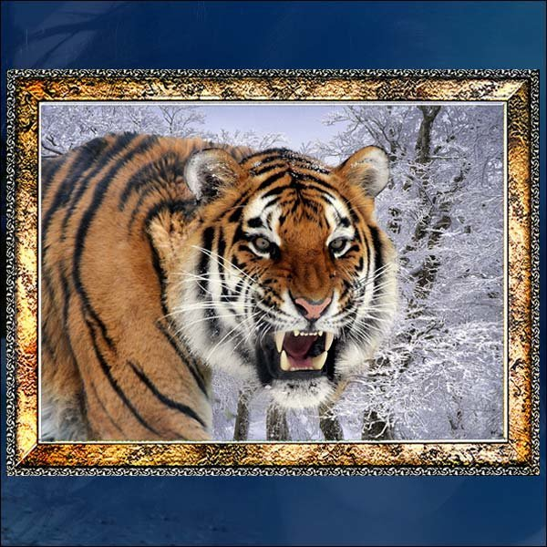 E178/호랑이액자/호랑이그림/호랑이사진/벽걸이액자 상품이미지