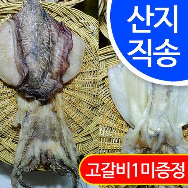 임피수산 반건조 갑오징어 1마리(대 23cm)/군산산지 직배송 상품이미지