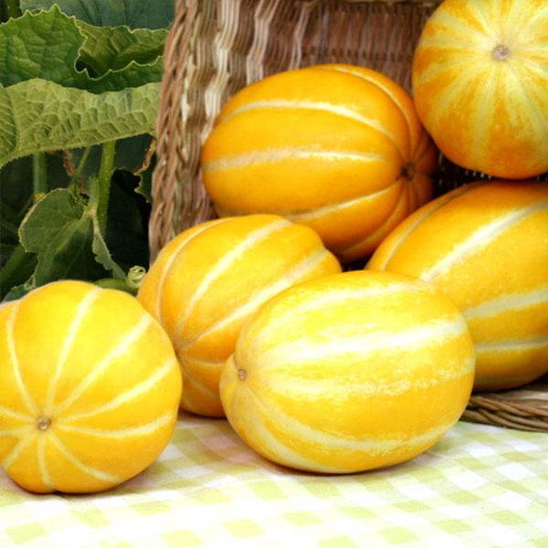 품절 햇참외로 찾아뵙겠습니다 다담농산 상품이미지