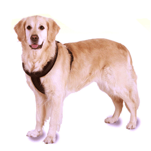 칼리 대형견목줄 하네스 강아지목줄 강아지용품 개줄 상품이미지
