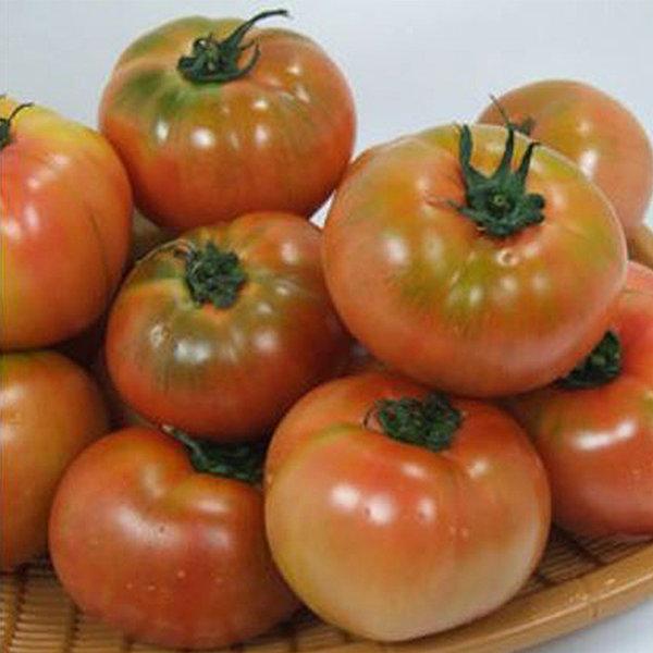 정품 찰 토마토 5kg(5번/소과) 상품이미지