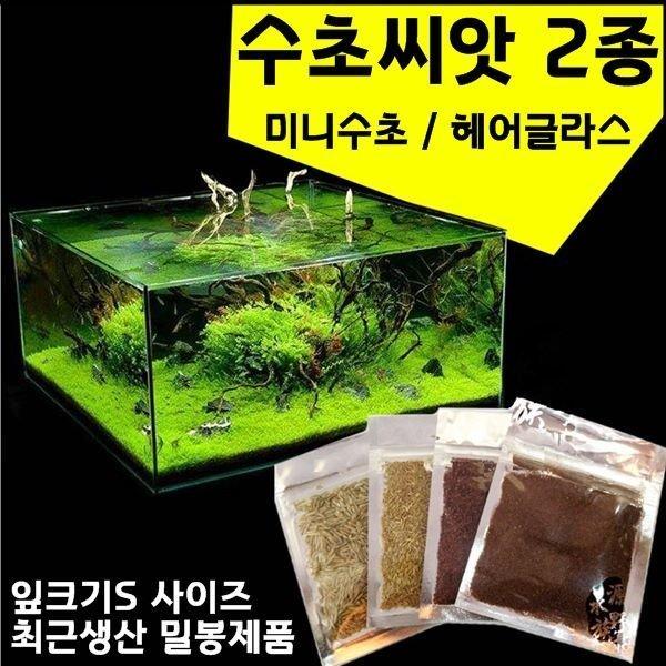 수초씨앗/수초씨/씨앗수초/전경수초/발아율95프로이상 상품이미지