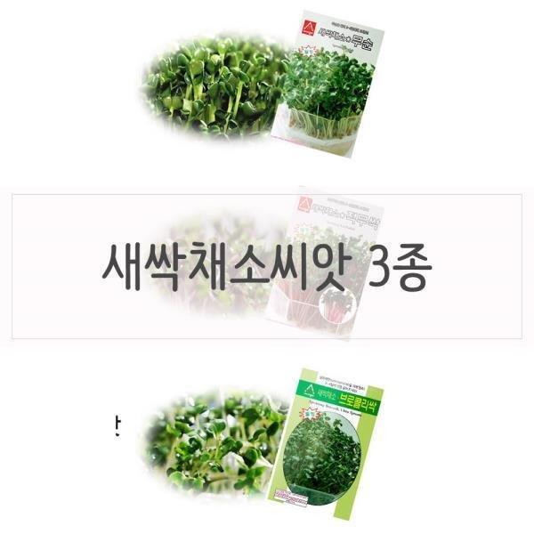 키우기쉬운식물 새싹 채소씨앗 2종 상품이미지