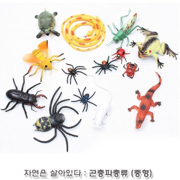 자연은살아있다-곤충파충류탐험 상품이미지