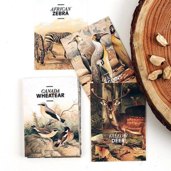 엽서팩 네이쳐 Nature 24종 엽서카드모음 편지세트 상품이미지