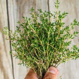 타임 허브 생잎 100g (thyme) 향신료 가니쉬