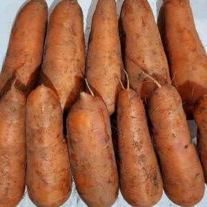 (20년산 국내산) 햇당근 10kg 당근 햇 당근 정품중과
