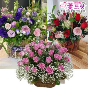 축하꽃바구니 축하선물 생일선물 생화 전국당일꽃배달