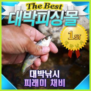 민물 피래미낚시/도깨비찌파리낚시/어포기/다슬기수경