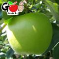 (설날맞이특가) 딱~먹기좋은 로얄中大/특大 부사 사과