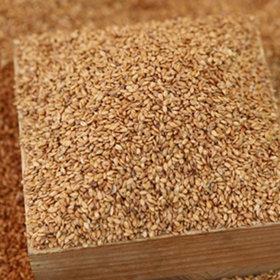 45_Roasted linseeds 1kg